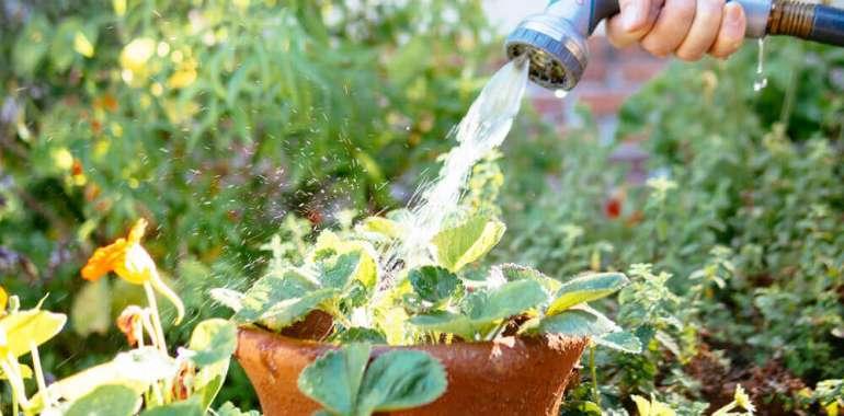 Eine Hitzewelle überleben: 6 Tipps zur Bewässerung bei heißem Wetter